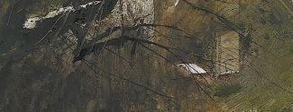 Portada de El Bosque