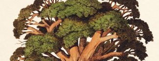 Portada de la novela «La expedición al baobab», de Wilma Stockenström